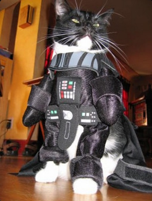 Top 10 Images of Star Wars cats