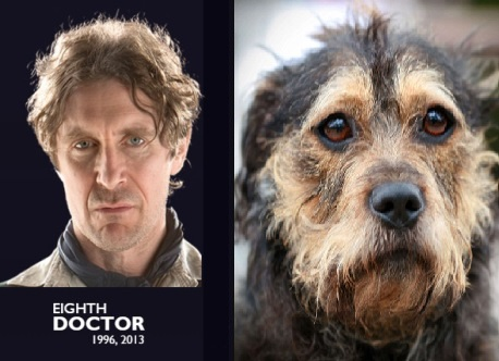 Doctor Who: If the Last 10 Doctors Were Dogs…