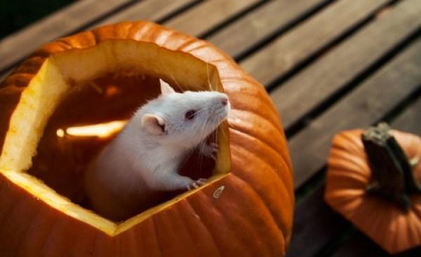 Top 10 Animals in Pumpkins