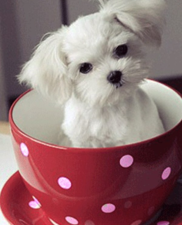 Top 10 Cutest Images of Pups in Cups