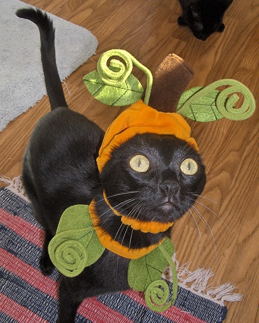 Top 10 Funniest Cats Dressed as Pumpkins