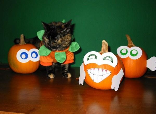 Top 10 Funniest Cats Dressed as Pumpkins