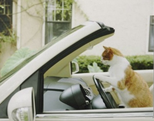 Top 10 Images of Cats Driving