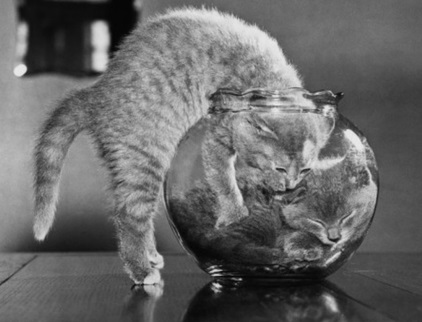 Top 10 Images of Cats in Glass Bowls