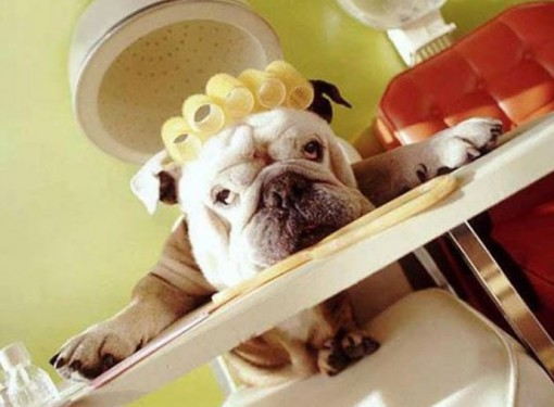 Top 10 Dogs Wearing Hair Curlers