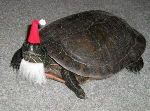 Top 10 Weird and Exotic Animals Wearing Santa Hats