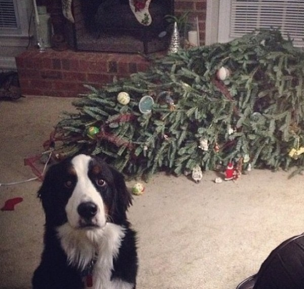 Top 10 Animals Who Think Its Time to Take Down The Christmas Tree