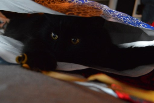 Top 10 Cats Playing With Wrapping Paper