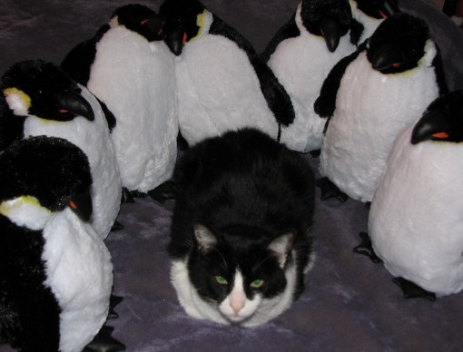 Cat with Penguin Army