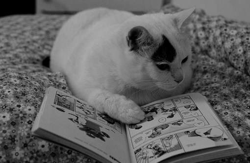 Top 10 Images of Cats Reading Books