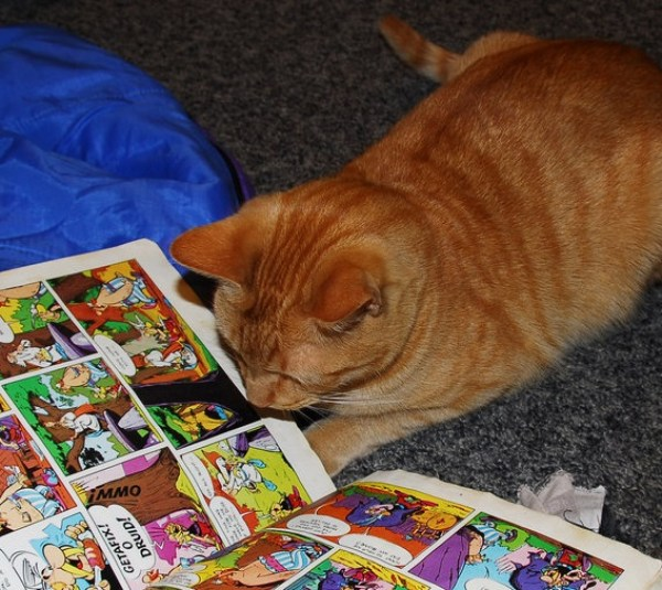 Ten Pictures of Cats Reading Books Trying to Educate Themselves