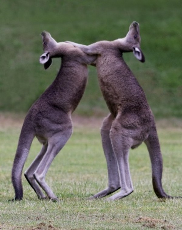 Top 10 Pictures of Animals Slow Dancing