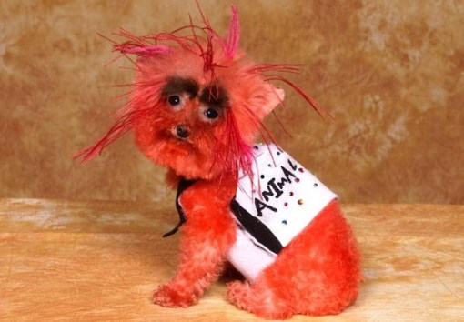 Top 10 Pictures of Dogs Dressed as Muppets