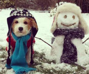 Ten Amazing Identical Snow Dogs Because Snowmen are Boring