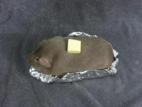Top 10 Best Guinea pigs in Fancy Dress