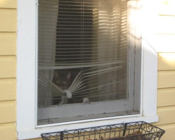 Top 10 Cats Peeking Through Blinds