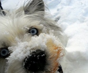 Ten Pictures of Dogs Playing in the Snow Having Loads of Fun