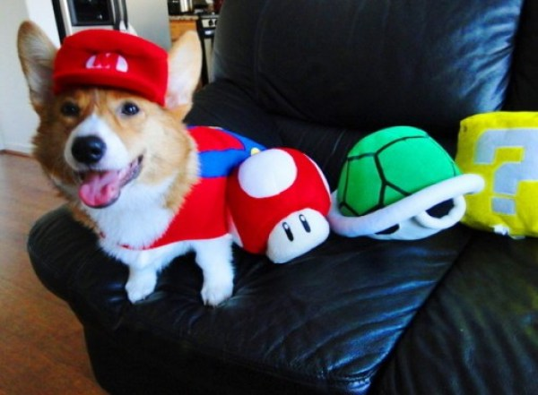 Ten Fun Loving Animals in Super Mario Costumes