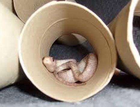 Top 10 Animals Inside Toilet Rolls