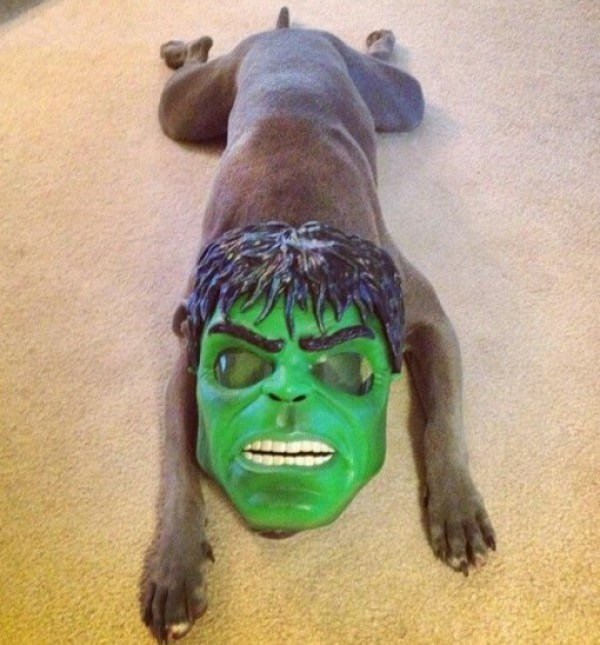 Top 10 Scary and Angry Hulk Dogs