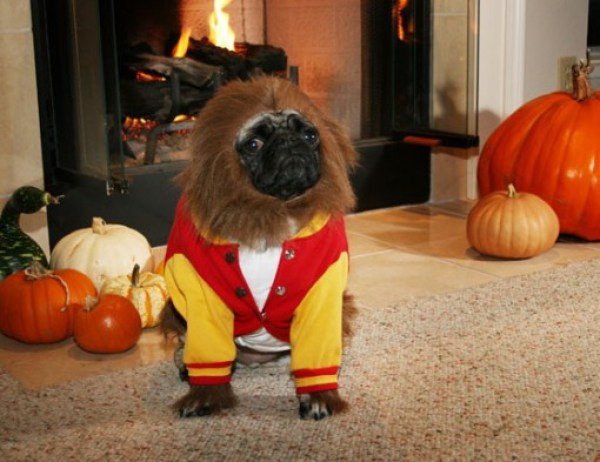 Top 10 Dogs Dressed As TV Series Characters
