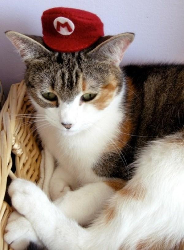 Top 10 Cats in Super Mario Costumes
