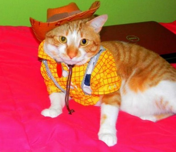 Cat Dressed as Woody: Toy Story
