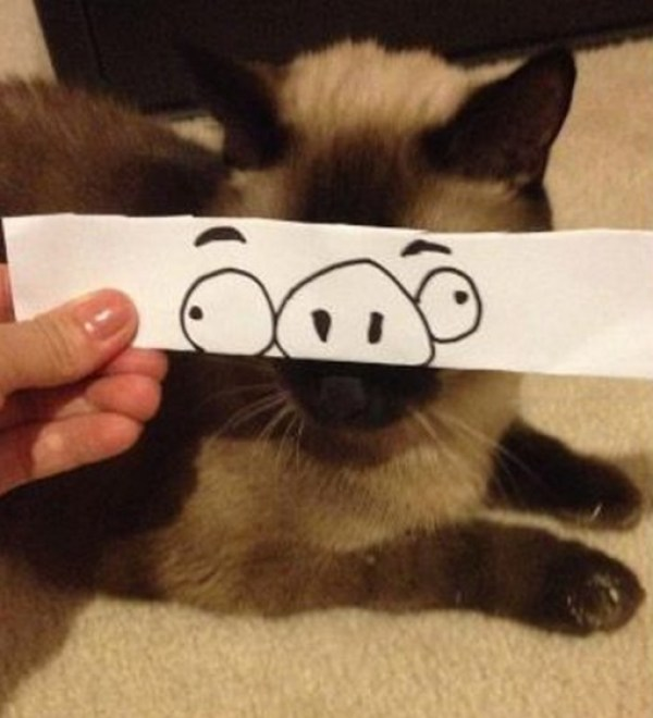 Top 10 Cats With Funny Cartoon Eyes