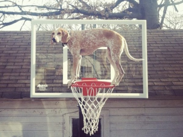 Top 10 Images of Maddie The Dog Balancing on Things
