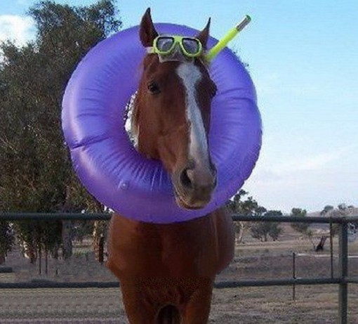 Horse in a Rubber Ring