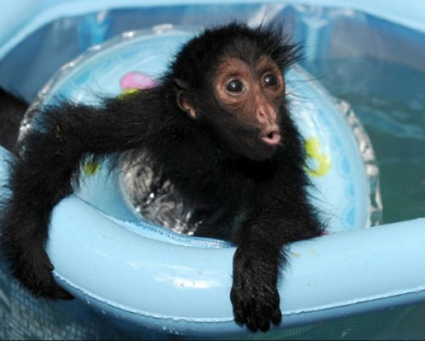 Top 10 Animals Wearing Rubber Rings