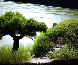 Top 10 Best Examples of Aquascaping