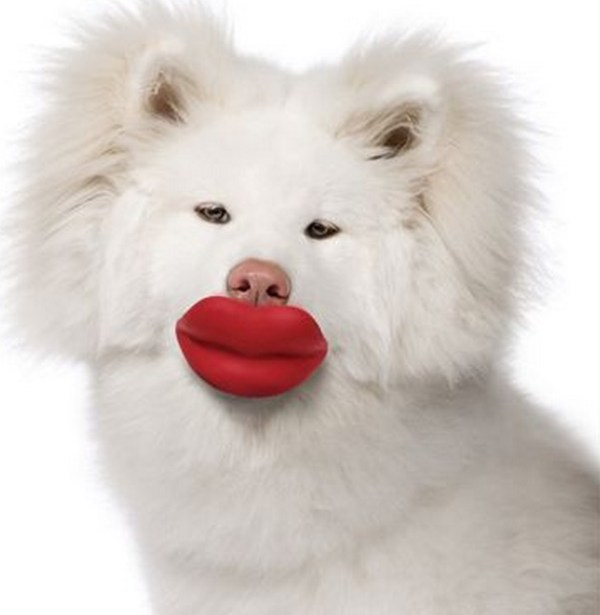 Top 10 Bigs Lips Kissable Dogs