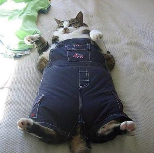Top 10 Fashionable Cats Wearing Denim