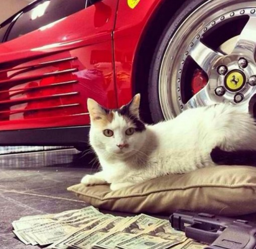 Top 10 Pictures of Thug Life Gangster Cats