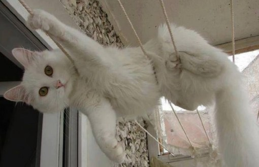 Top 10 Cute Cats on Washing Lines