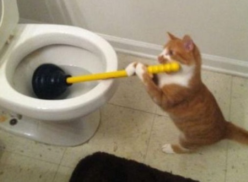 Top 10 Genius Toilet Trained Cats