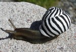 Top 10 Slow Moving, But Creative Graffiti snails