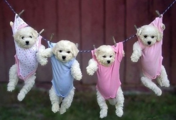 Dogs on a Washing Line