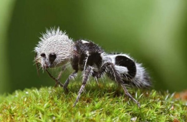 Top 10 Amazing and Unusual Ants