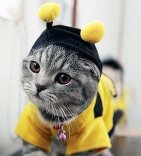 Top 10 Buzzing Animals Dressed as Bees