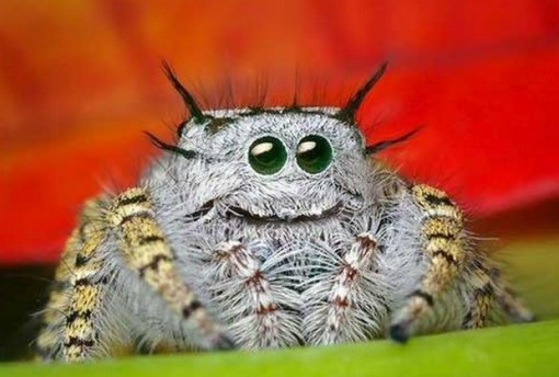 Top 10 Strangely Beautiful and Unusual Spiders