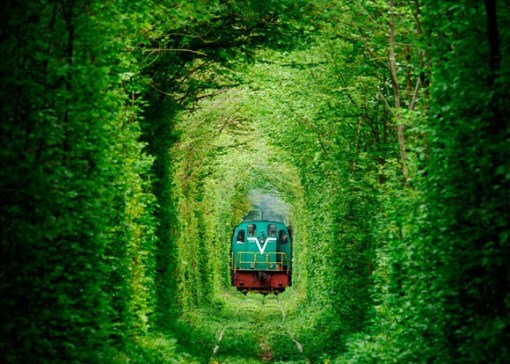 Tunnel Made From Trees