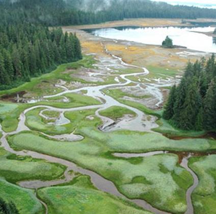 Southeast Alaska Salt Marsh