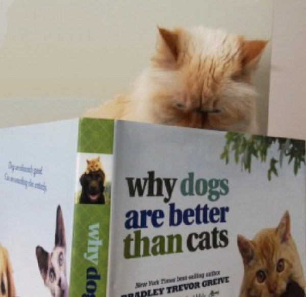 Ten Literate Book Loving Cats Reading Books About Cats!