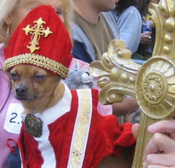 Top 10 Crazy Catholic Pope Dogs