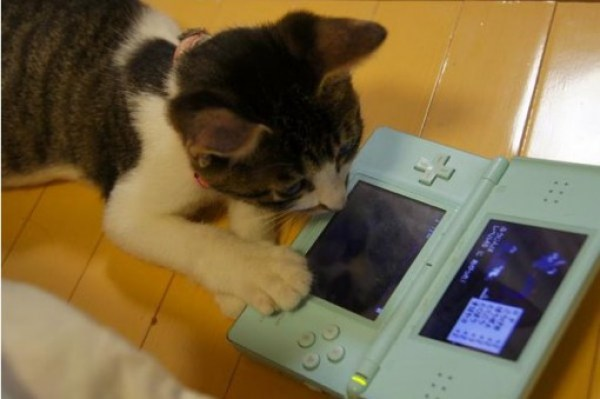 Top 10 Nerdy Nintendo Fanboy Cats