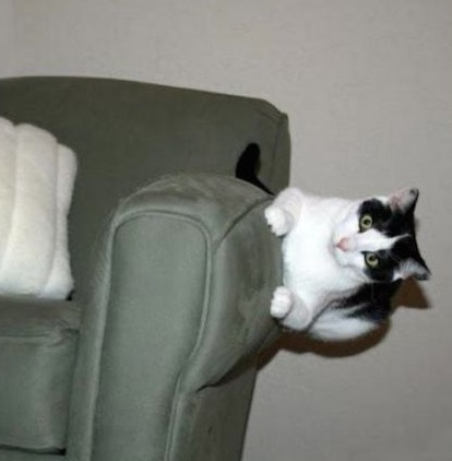 Top 10 Comfortable Monorail Cats