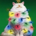 Top 10 Cats Helping to Put Up The Christmas Lights