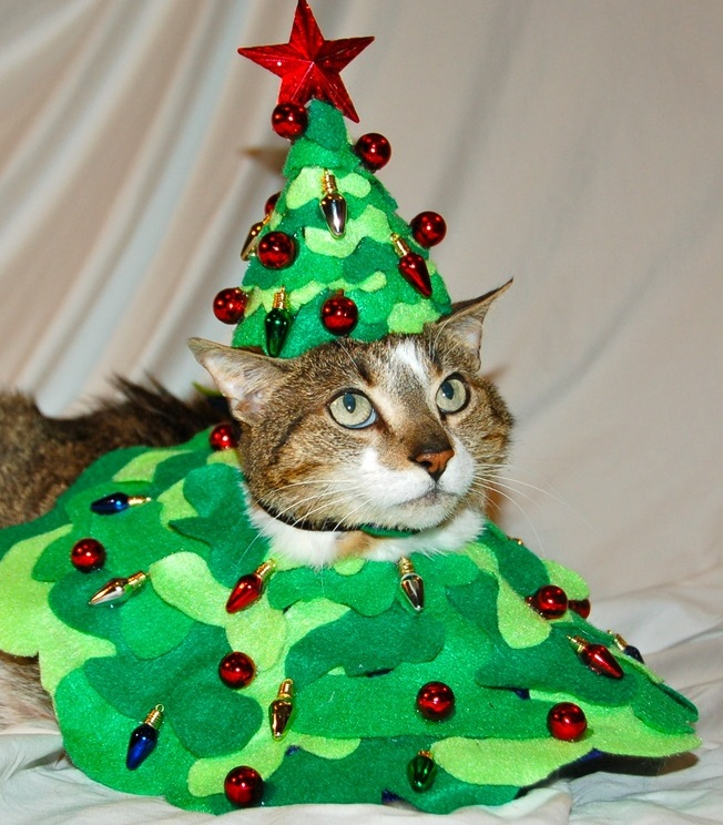 Are Christmas Trees Bad For Cats: Top 10 Festive Costume Christmas Tree Cats